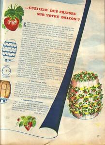 les-fraises-sur-votre-balcon0001