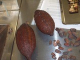 Visite du jeudi-yver chocolatier
